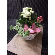 Plant Arrangement in a Basket 20 cm