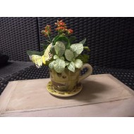 Plant Arrangement in a Cup and saucer